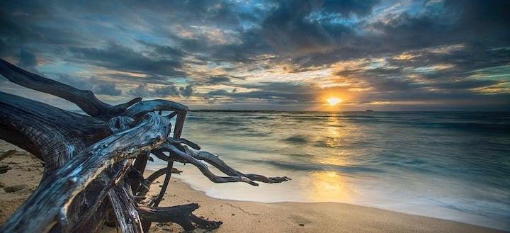 Driftwood Beach photo
